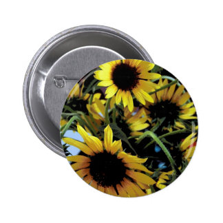 Sunflowers in the sun pinback button