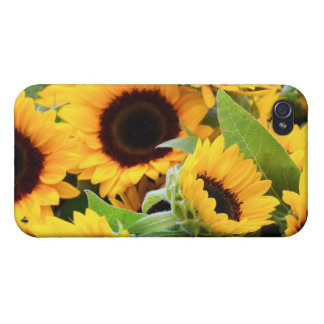Sunflowers iPhone 4 Cases