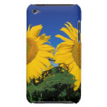 Sunflowers iPod Touch Covers
