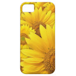 Sunflowers.jpg iPhone 5 Protectores