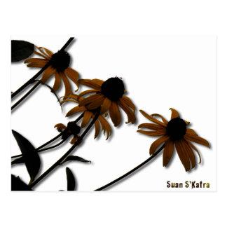Sunflowers: Kansas Grown Postcard