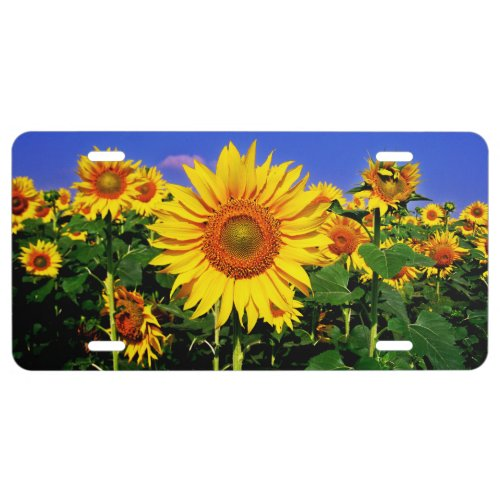 Sunflowers License Plate