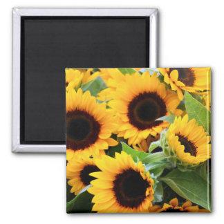Sunflowers Fridge Magnet