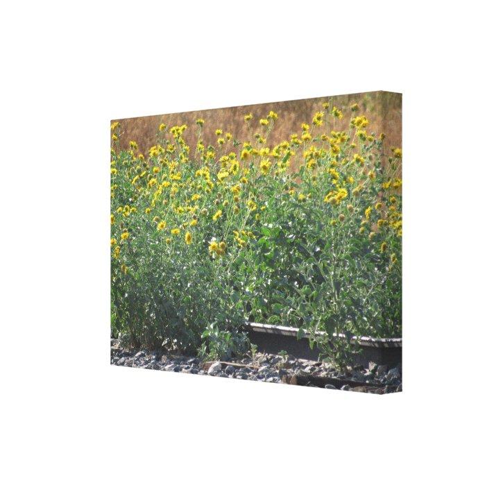Sunflowers Near The Train Tracks Canvas Print