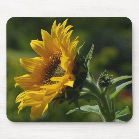 Sunflowers Petals Pollen Yellow Mouse Pad