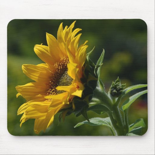 Sunflowers Petals Pollen Yellow Mouse Pads