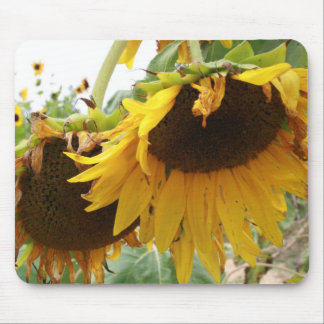 sunflowers photograph flower picture mouse pads