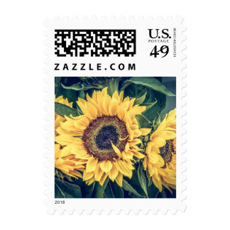 Sunflowers Postage Stamp