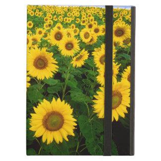 Sunflowers Powis iCase iPad Case