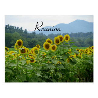 Sunflowers Reunion Postcard Postcards