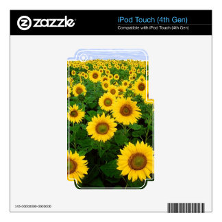 SUNFLOWERS SKIN FOR iPod TOUCH 4G
