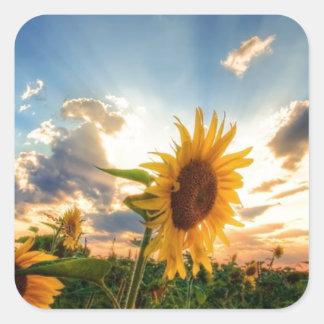 Sunflowers Square Sticker