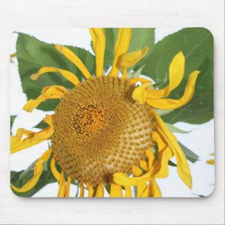 sunflowers sun flower picture photos mousepads