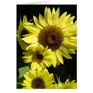 SUNFLOWERS SUN FLOWERS GREETING CARDS NOTE CARD