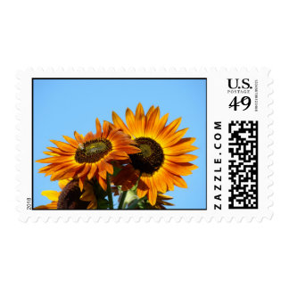 SUNFLOWERS Sun flowers POSTAGE STAMPS Invitations