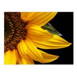 Sunflowers - Sunflower Customized Template Blank Post Card