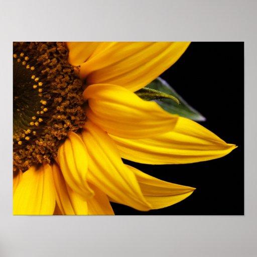 Sunflowers - Sunflower Customized Template Blank Poster