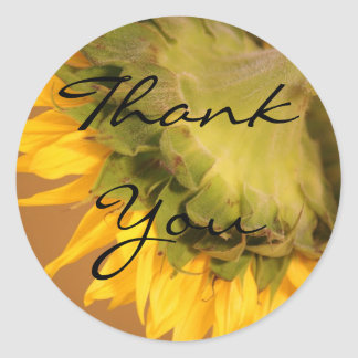 Sunflowers, Thank You Classic Round Sticker