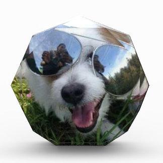Sunglasses on dog BRIGHT FUTURE for ME Acrylic Award