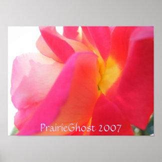 Sunglow Rose Print