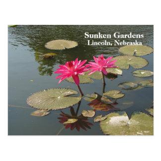 Sunken Gardens Pink Water lilies #80N  080 Postcard