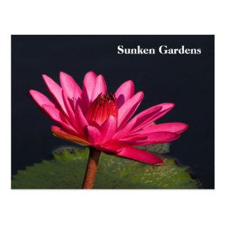Sunken Gardens pink water lily #90N  090 Postcard