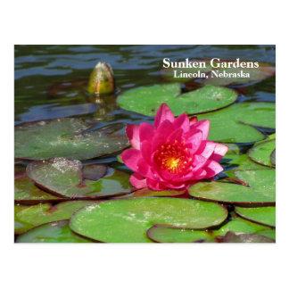 Sunken Gardens pink water lily #91  00919191 Postcard
