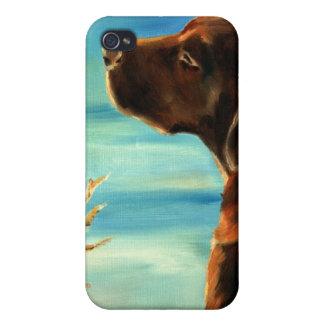 Sunkissed- Chocolate Labrador Retriever art iPhone 4 Case