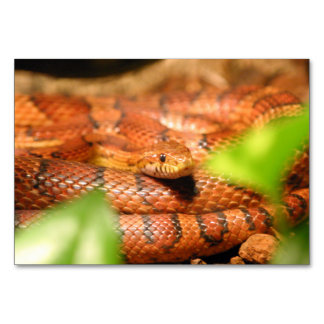 sunkissed corn snake.png card