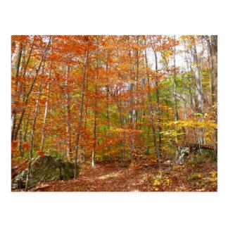 Sunlight Dappled Fall Trail at Laurel Hill Park Postcard