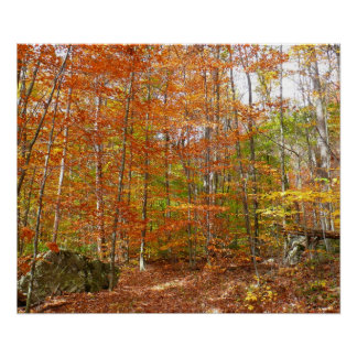 Sunlight Dappled Fall Trail at Laurel Hill Park Poster