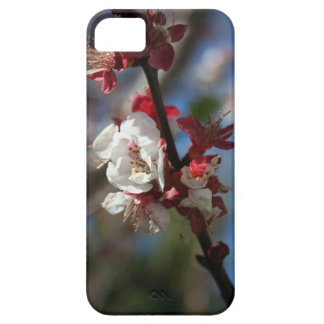 Sunlight Embracing Apricot Blossom iPhone 5 Cover