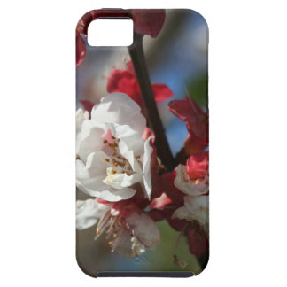 Sunlight Embracing Apricot Blossom iPhone 5 Case