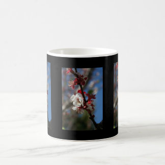 Sunlight Embracing Apricot Blossom Coffee Mug