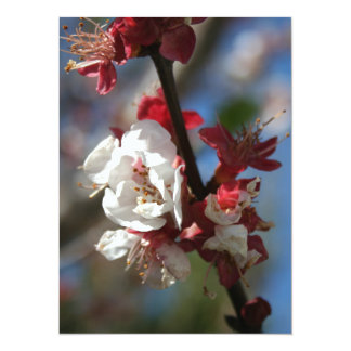 Sunlight Embracing Apricot Blossom Personalized Announcements