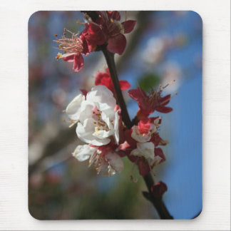 Sunlight Embracing Apricot Blossom Mouse Pad
