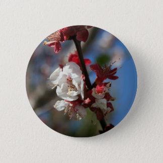 Sunlight Embracing Apricot Blossom Pinback Button