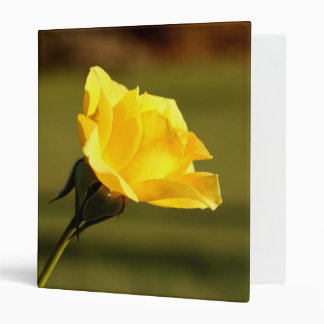 Sunlight Filtered Thru Yellow Rose Binder