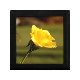 Sunlight Filtered Thru Yellow Rose Gift Box