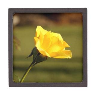 Sunlight Filtered Thru Yellow Rose Jewelry Box