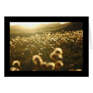 Sunlight Flowers Greeting Card