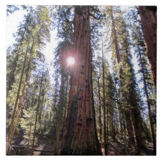 Sunlight Forest Photo Tile