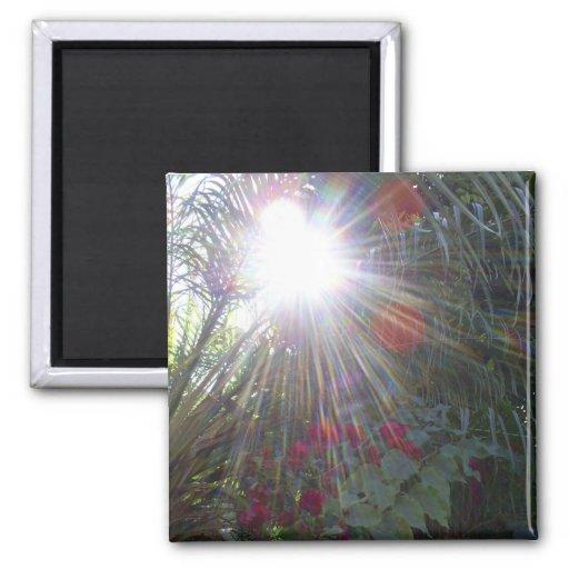 Sunlight Garden Fridge Magnets