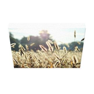 Sunlight illuminates a field of grain canvas print