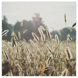 Sunlight illuminates a field of grain fabric