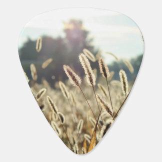 Sunlight illuminates a field of grain guitar pick