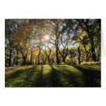 Sunlight in Central Park Greeting Card