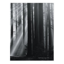 Sunlight in forest postcard