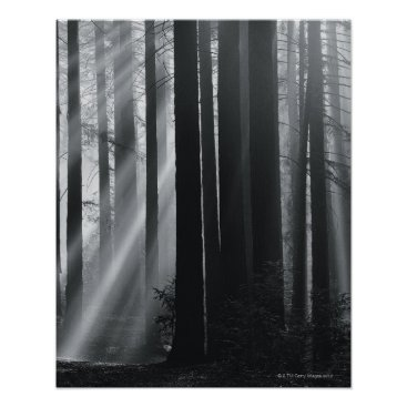USA Themed Sunlight in forest poster