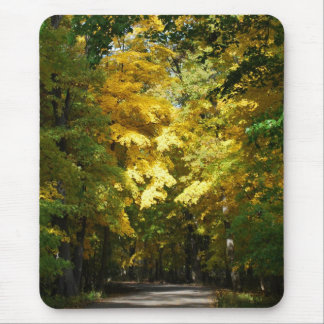 Sunlight in the Trees Mouse Pad